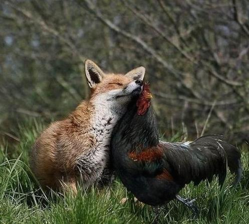 abrazo animal 9