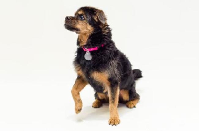 adopta perro adulto 6