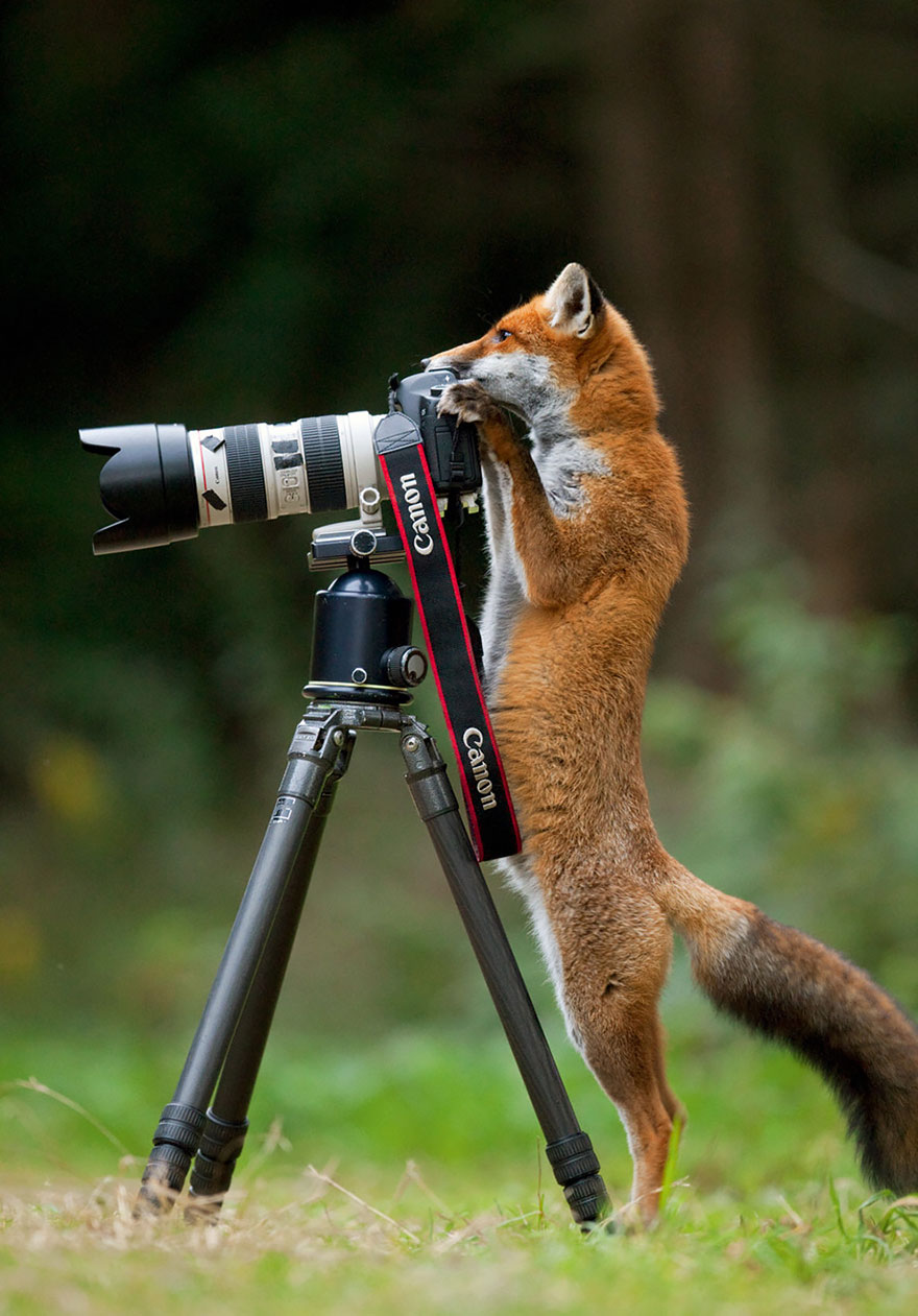 animales fotografos 10