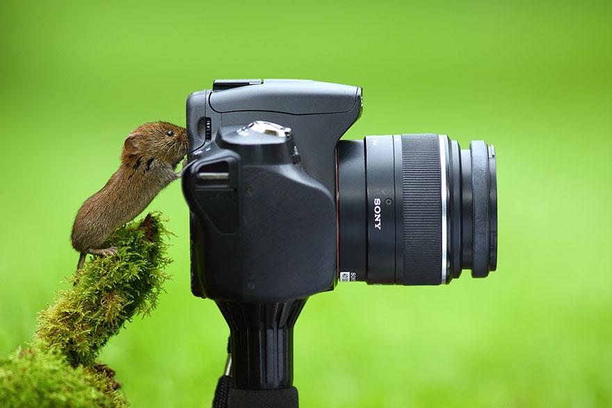 animales fotografos 11