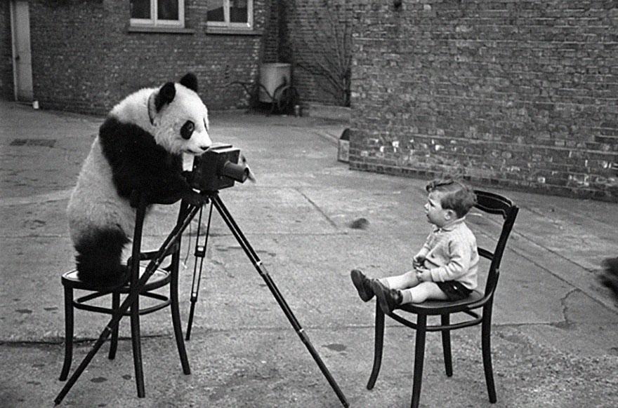 animales fotografos 12