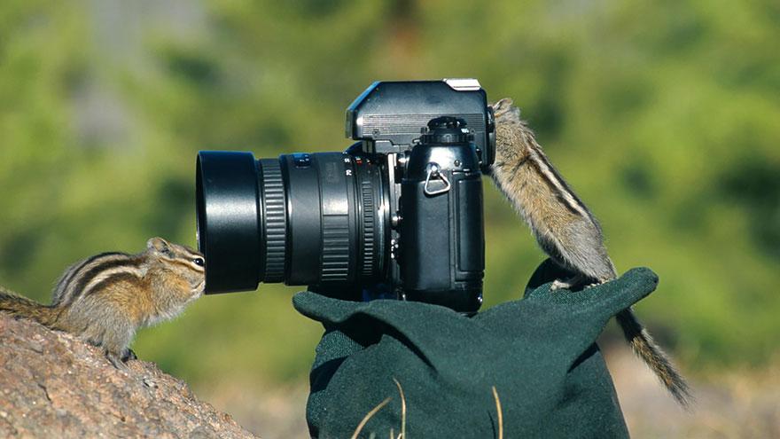animales fotografos 13