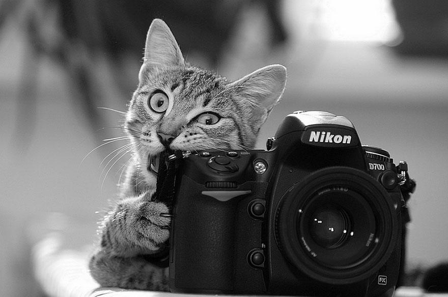 animales fotografos 14