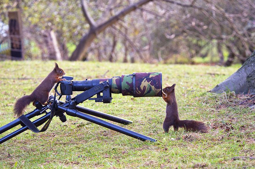 animales fotografos 15