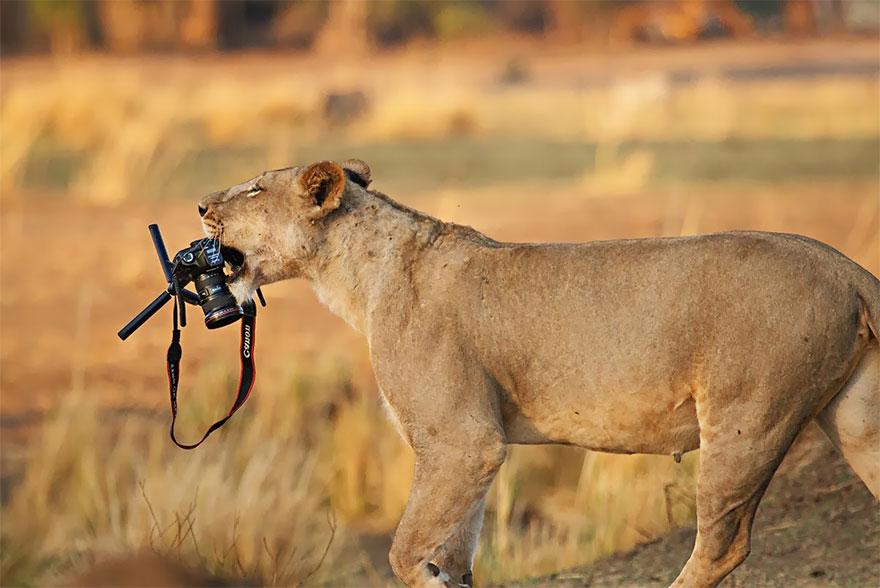 animales fotografos 16
