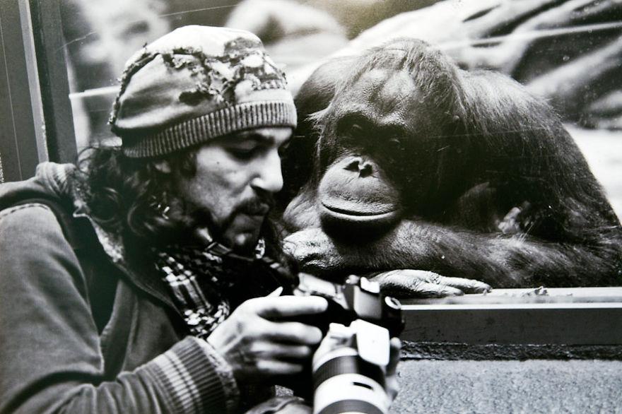 animales fotografos 17