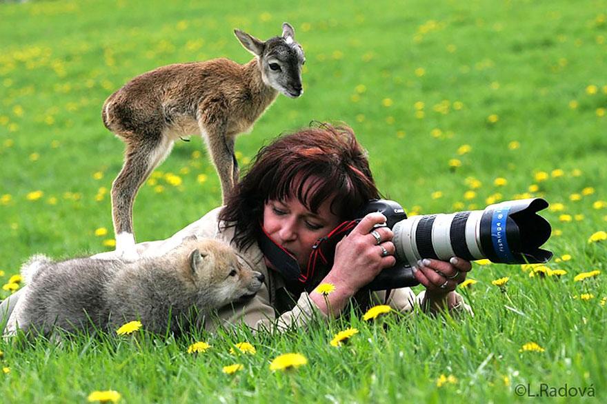 animales fotografos 4