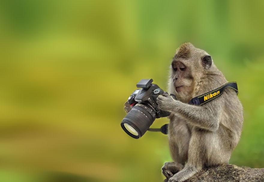 animales fotografos 6
