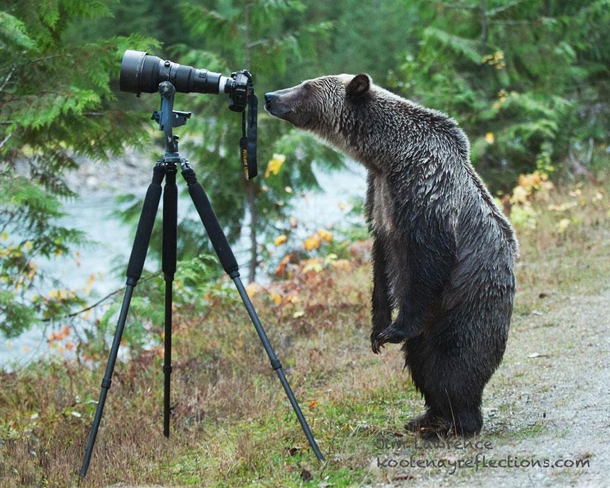 animales fotografos 7