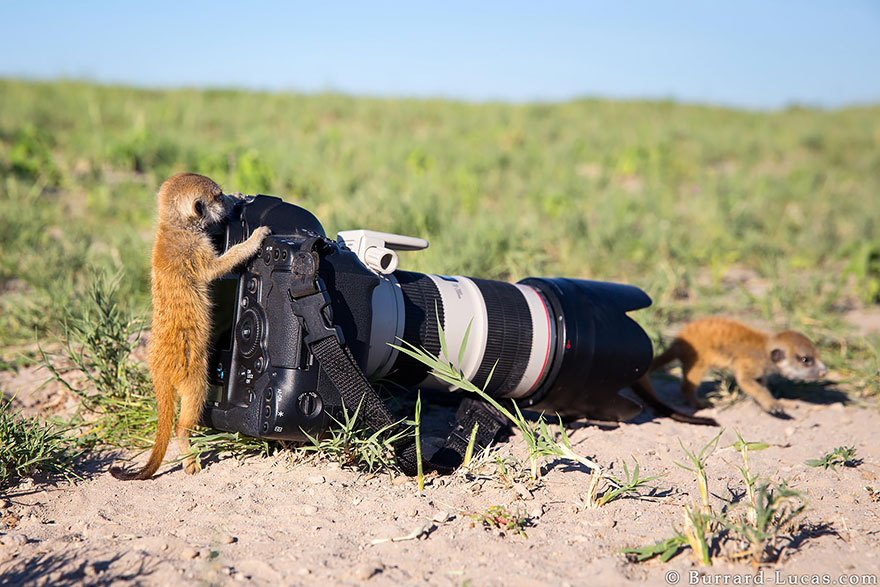 animales fotografos 8