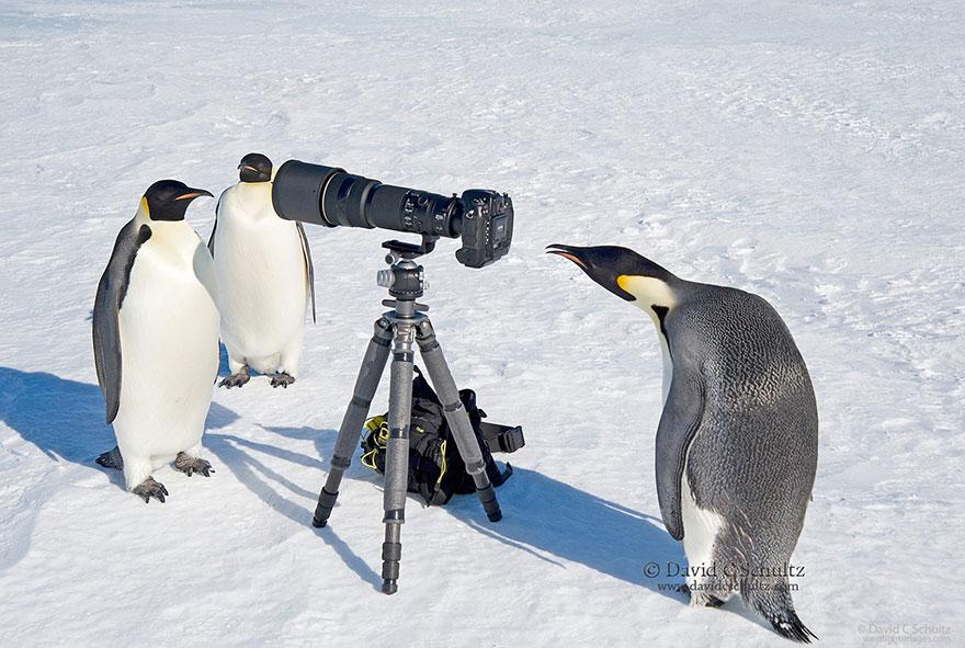 animales fotografos 9