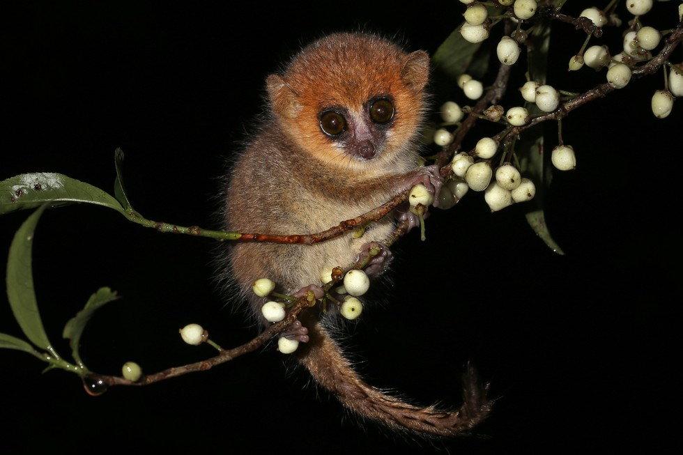 animales pequeños 10
