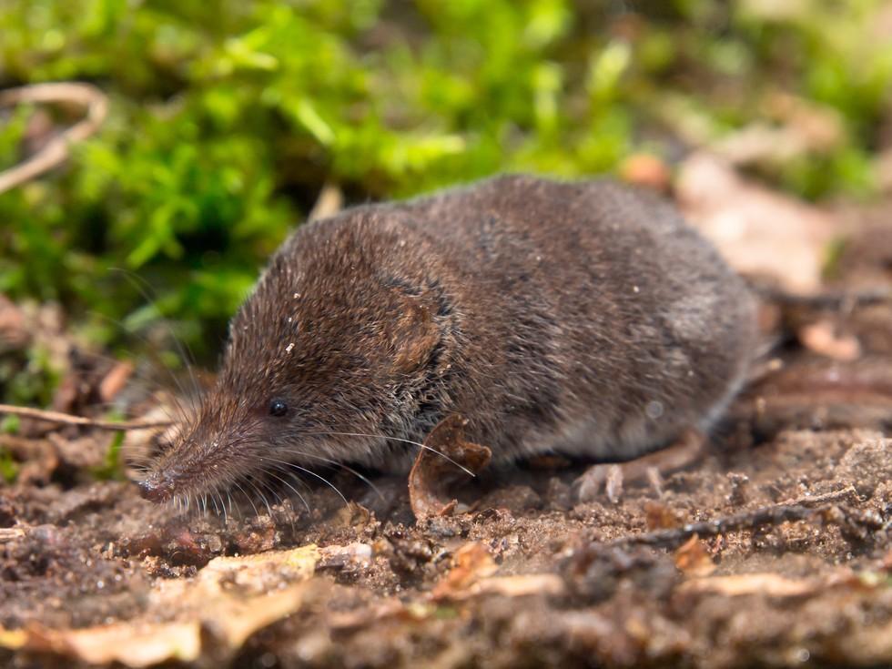 animales pequeños 6