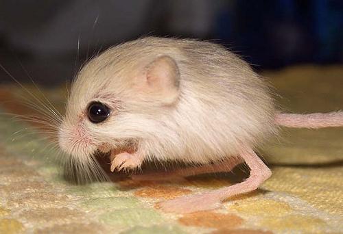 animales pequeños 8