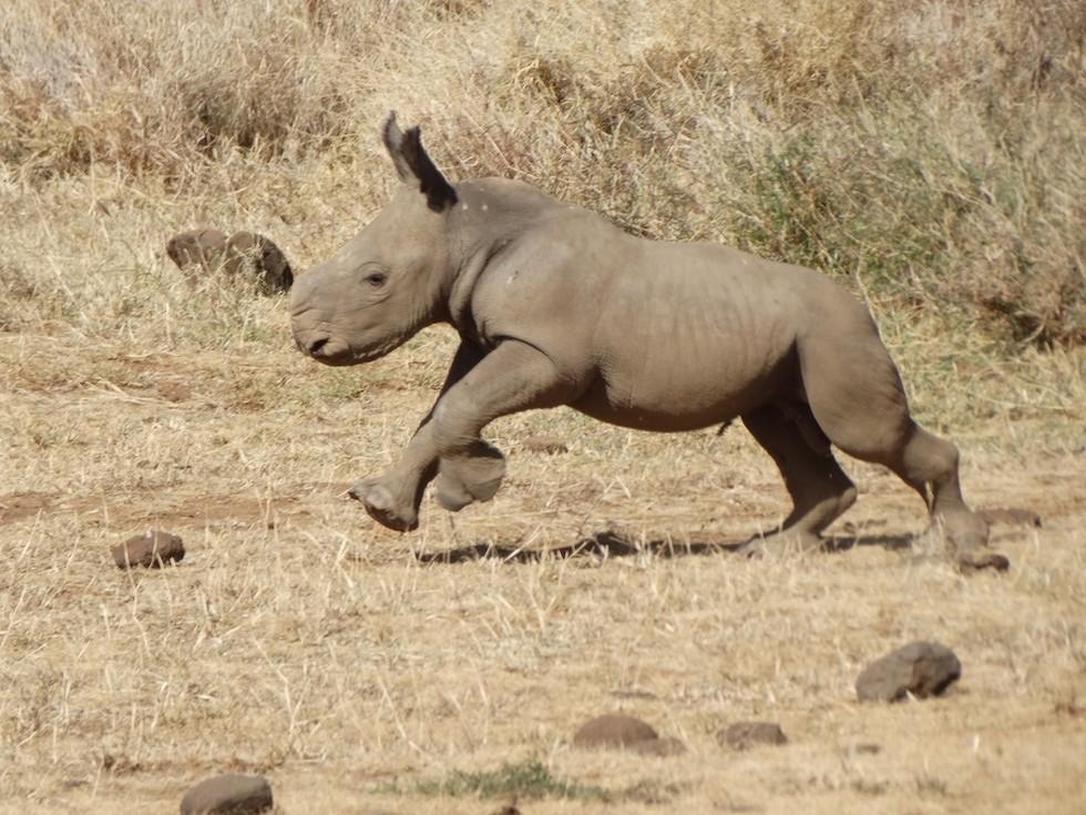 bebe rinoceronte 2