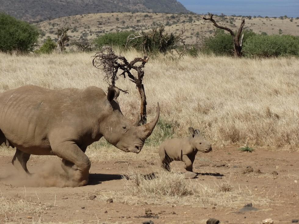 bebe rinoceronte 5