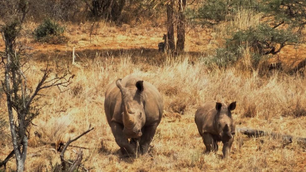 bebe rinoceronte 6