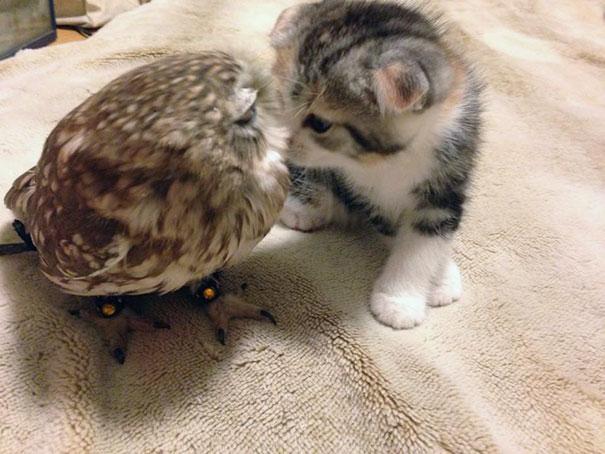 beso-buho-gato
