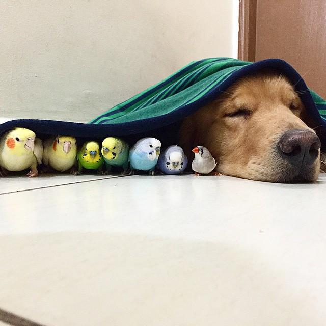 bob-duerme