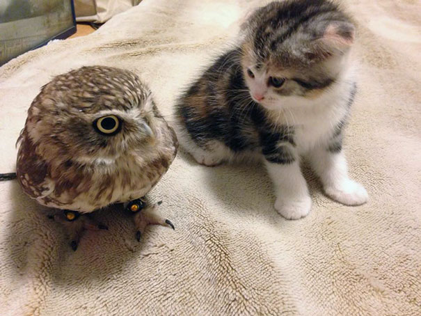 buho-gato-amigos