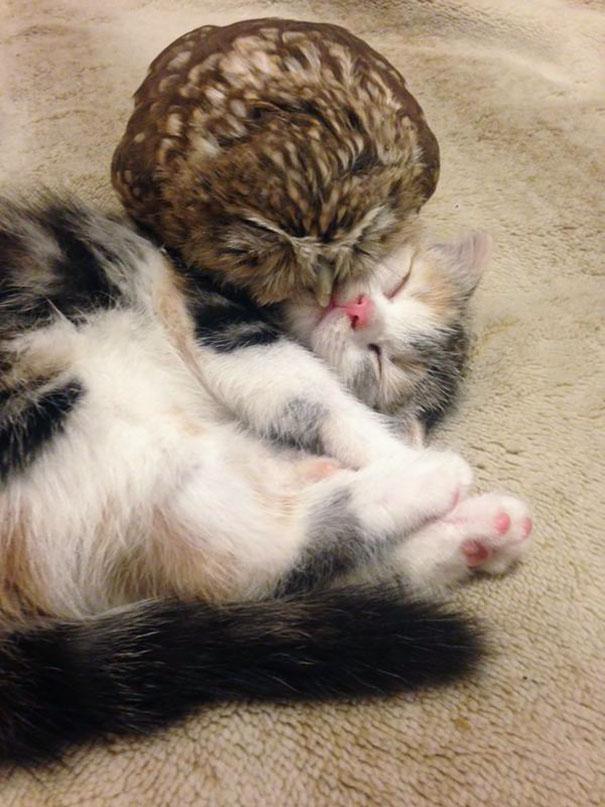 buho-gato-siesta
