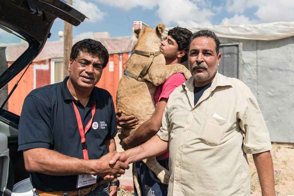 cachorros de leon rescatados 4