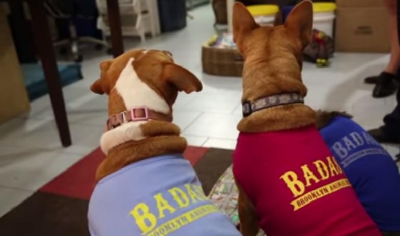 Cachorros-