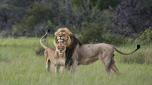 cecil-leon-leona