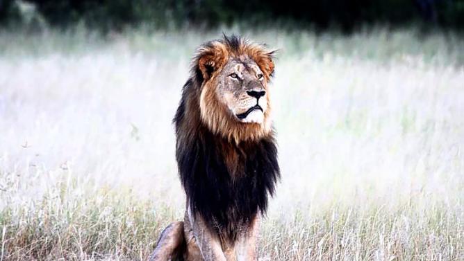 cecil-leon-muerto