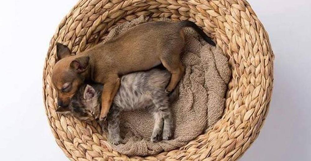 Chip y Adele, dos animalitos unidos por el abandono y el dolor, que se volvieron inseparables