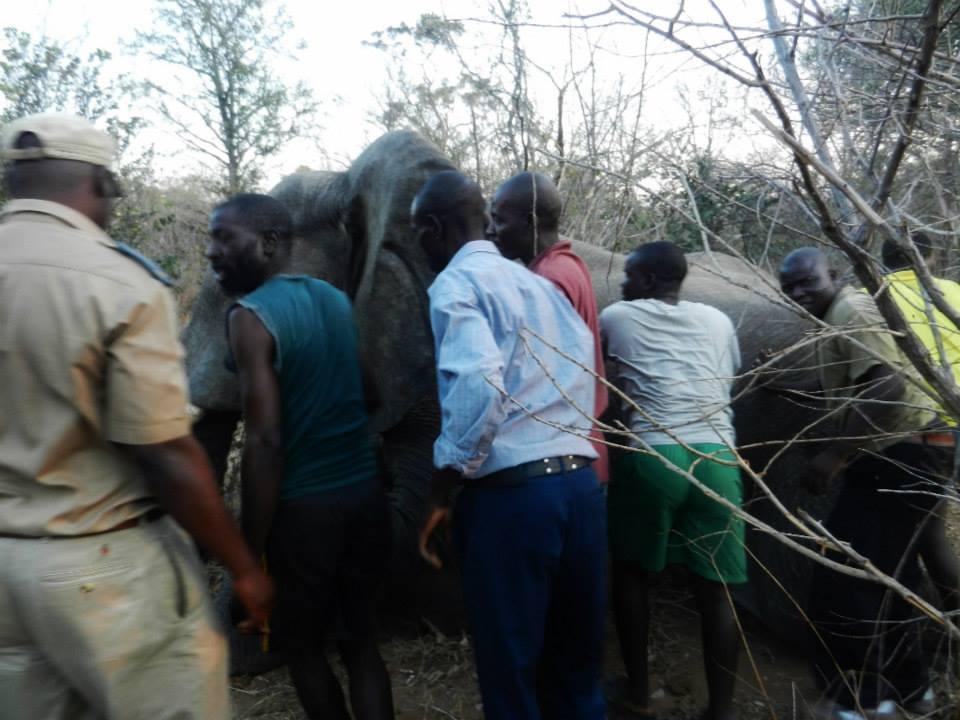Elefante-rescatistas