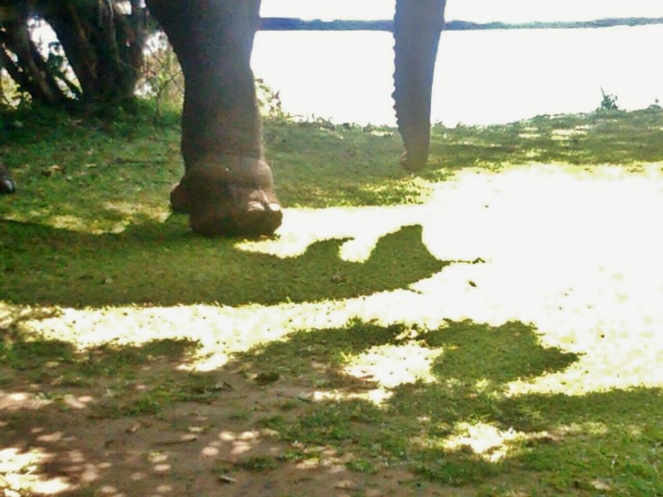 Elefante-trampa