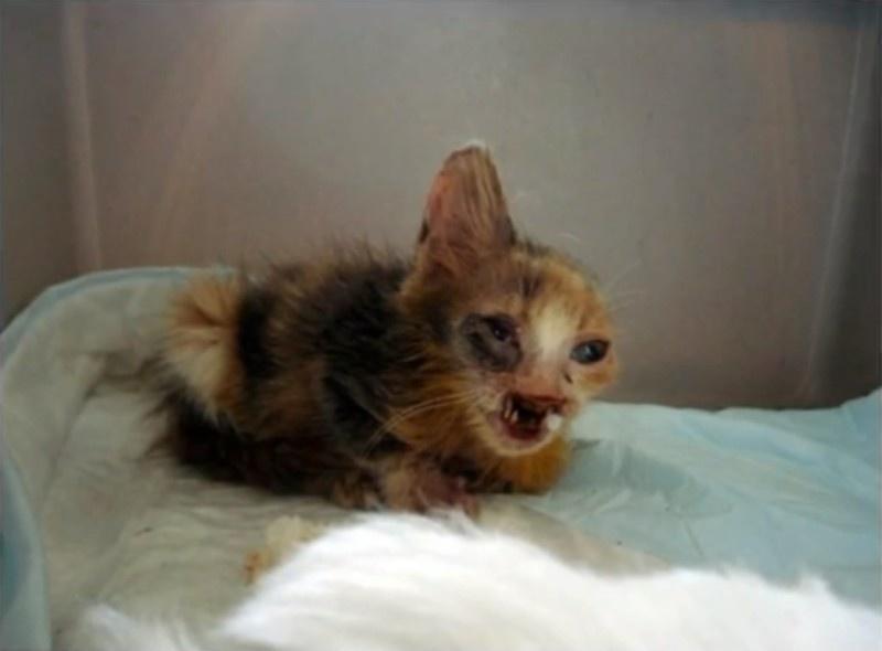 gatito desfigurado 1