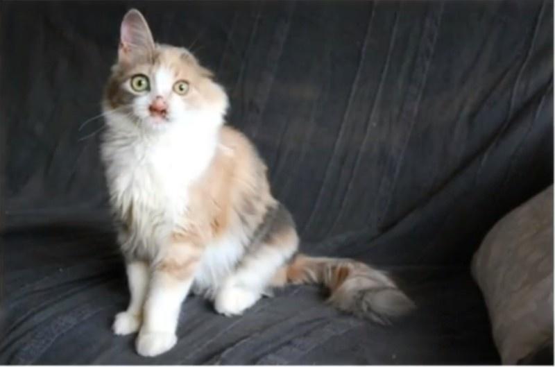 gatito desfigurado 10
