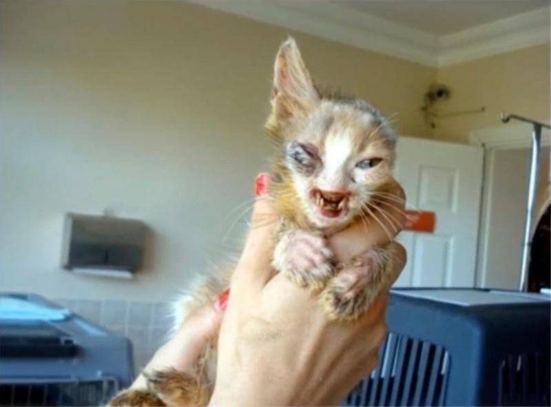gatito desfigurado 2