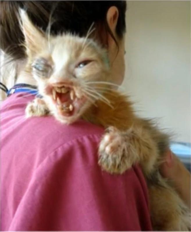 gatito desfigurado 4