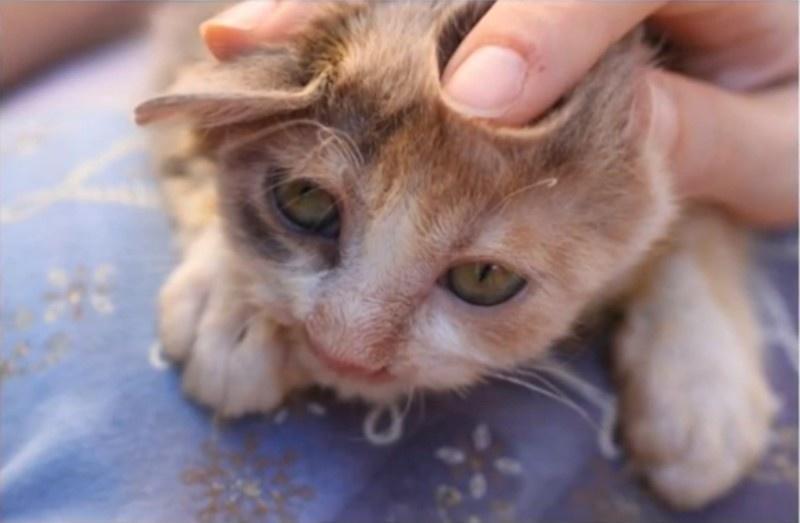 gatito desfigurado 8