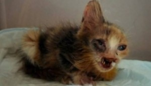 gatito desfigurado id Cropped