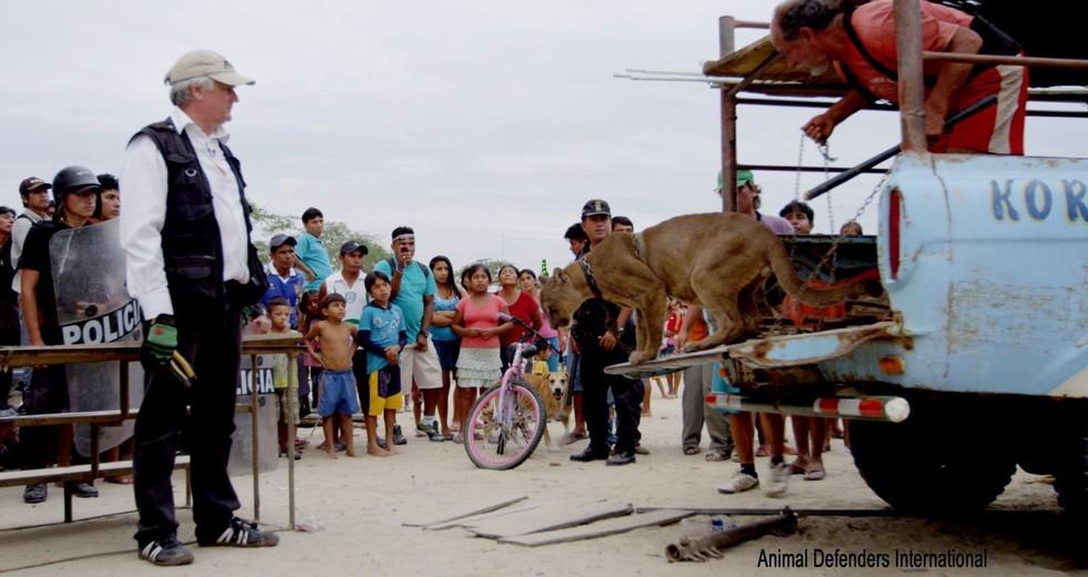 gato cirquero 6