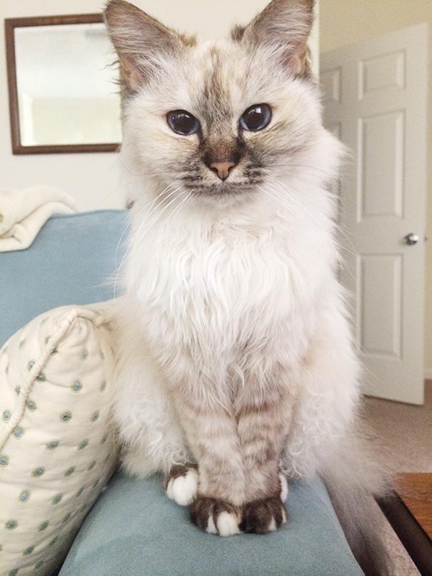 gatos adultos adoptados 4