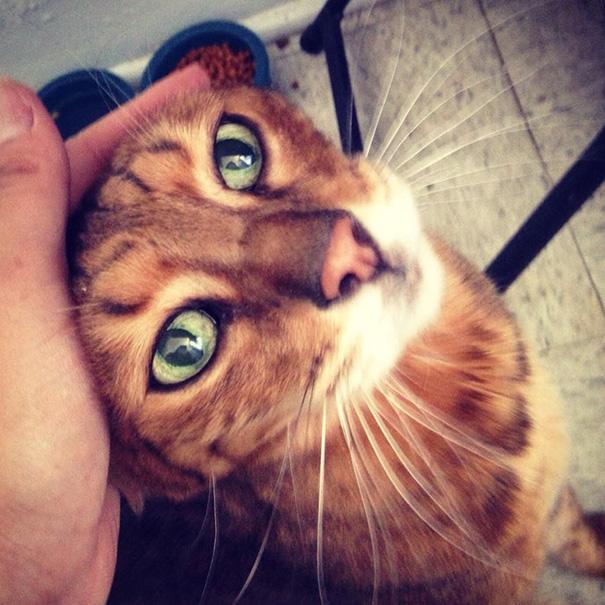 gatos adultos adoptados 5