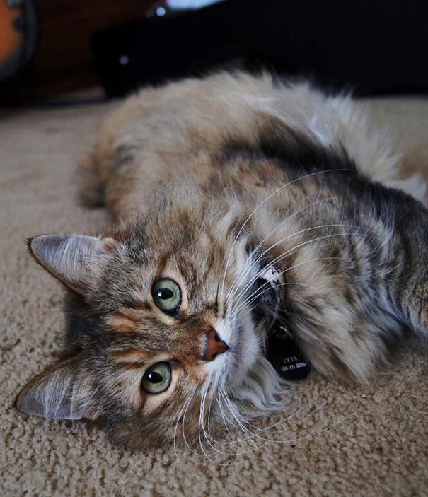gatos adultos adoptados 7