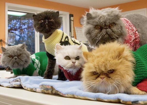 gatos adultos adoptados 9