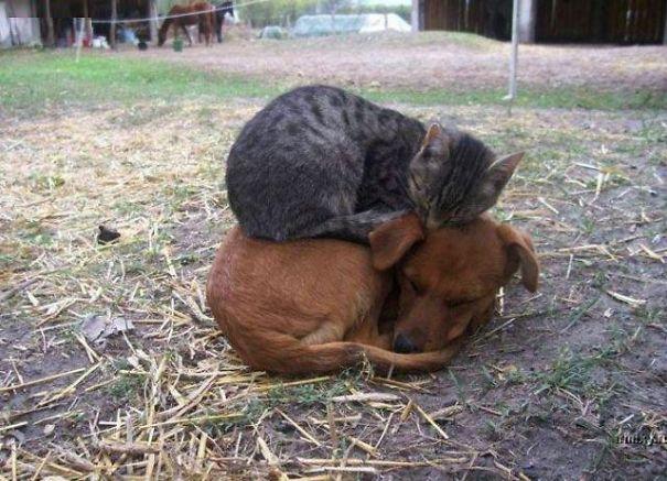 gatos dormidos en perros 1