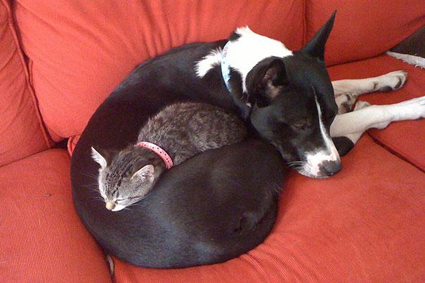 gatos dormidos en perros 10