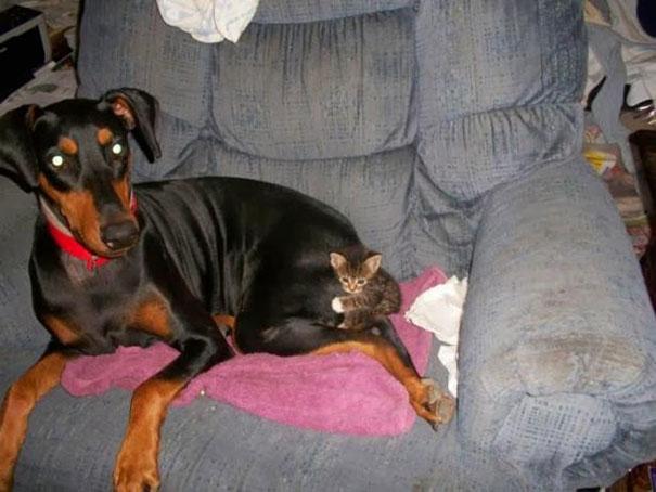 gatos dormidos en perros 13