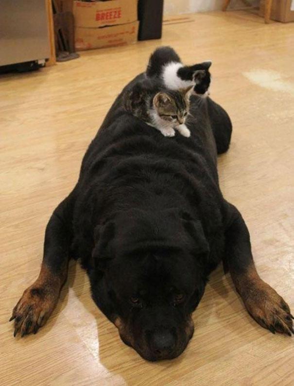 gatos dormidos en perros 16