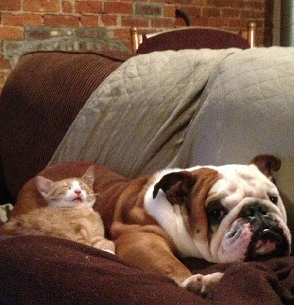 gatos dormidos en perros 17