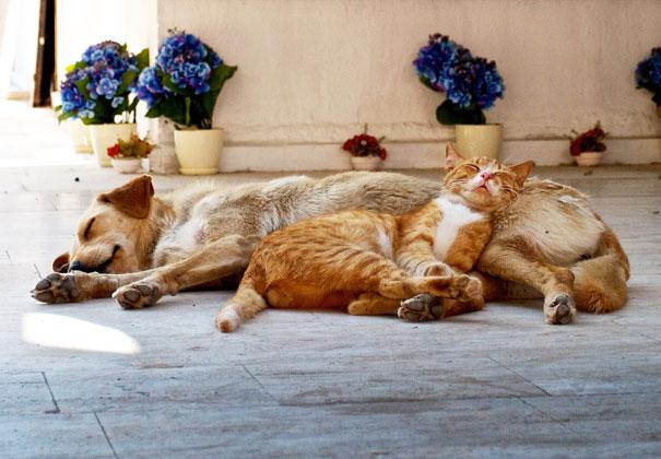 gatos dormidos en perros 18
