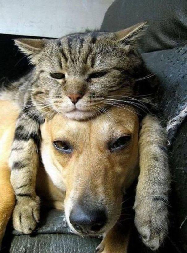 gatos dormidos en perros 2